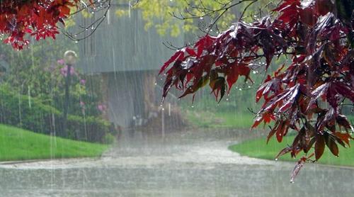 यंदा सरासरी 98 टक्के पाऊस होणार>